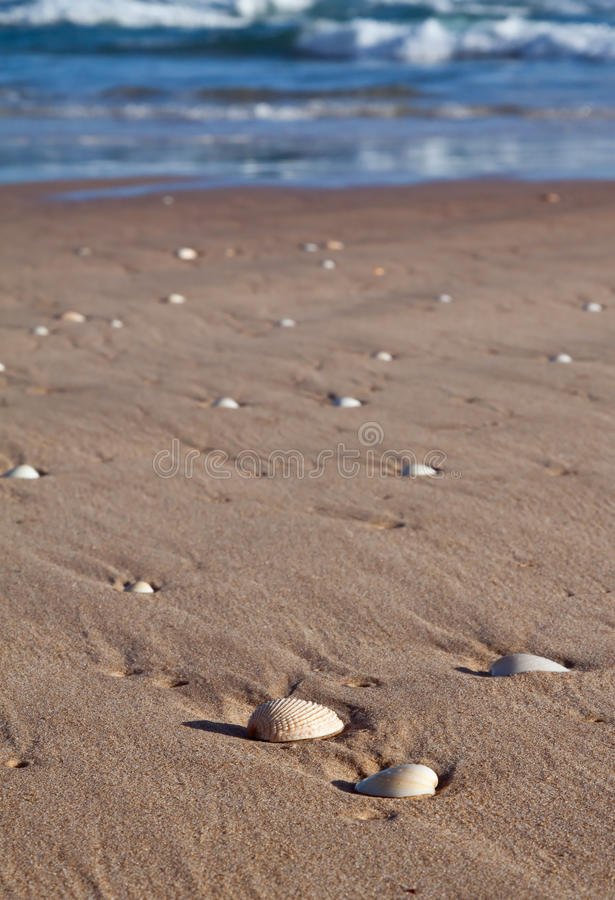 Download Sea Shells Lying In Wet Sand On The Beach Stock Image - Image: 15166857