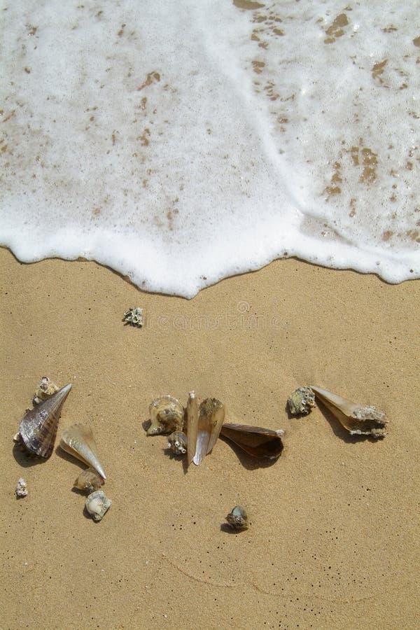 Sea-shells na praia fotos de stock royalty free
