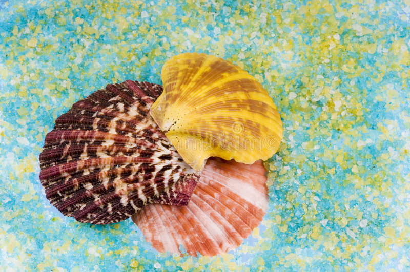 Sea shells over salt grains. royalty free stock photo