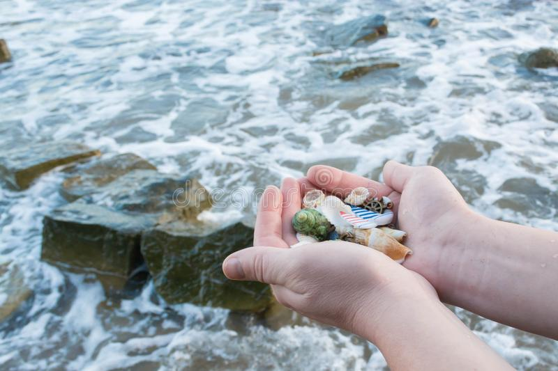 Shells in the hands 6 royalty free stock photography