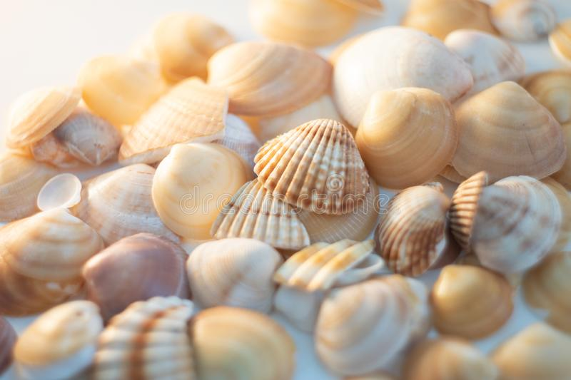 Sea shells pattern. Texture. White background stock photo