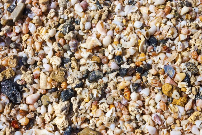 Sea shells and pebbles on the beach stock image