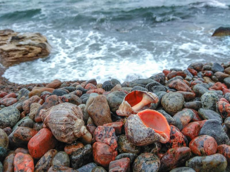 Sea shells by the sea on pebbles royalty free stock photo