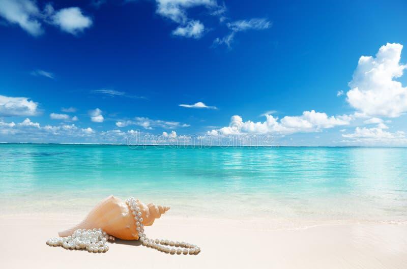 Sea shells and perls stock photography