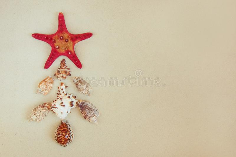 Sea shells and red star fish on sandy beach with copy space for text. Noel christmas concept. stock photos