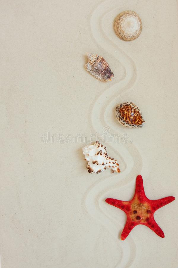 Sea shells and red star fish on sandy beach with copy space for text royalty free stock photo