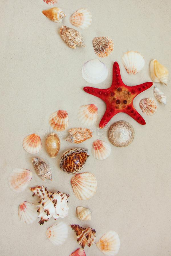Sea shells and red star fish on sandy beach with copy space for text stock image