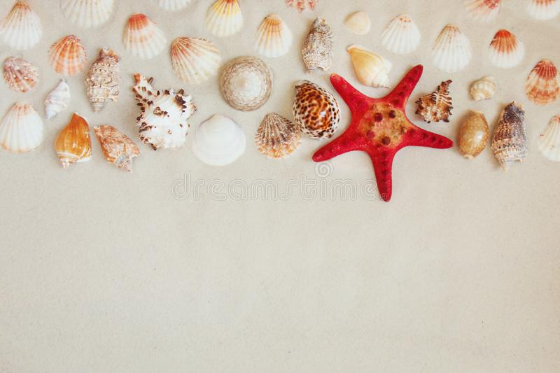 Sea shells and red star fish on sandy beach with copy space for text stock images