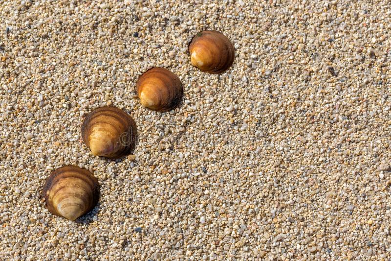 Sea shells in a row on the sand. Summer beach background. Top view. Space for text stock photo