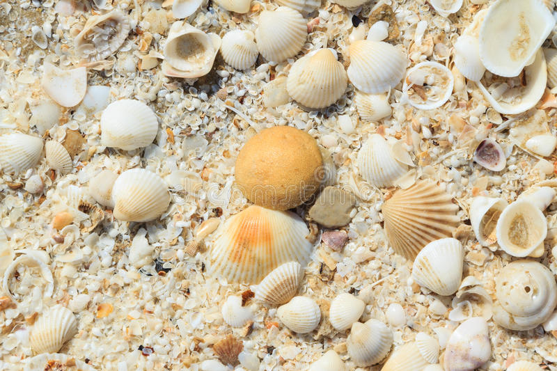 Sea shells on sand royalty free stock photos