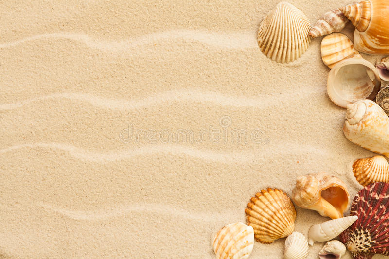 Sea shells with sand stock photography