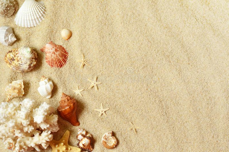 Sea shells with sand as background. Summer beach stock photography