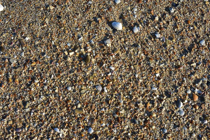 Sea shells sand detail stock images