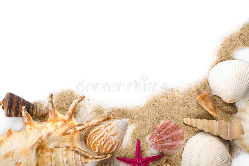 Sea shells in sand isolated stock photo