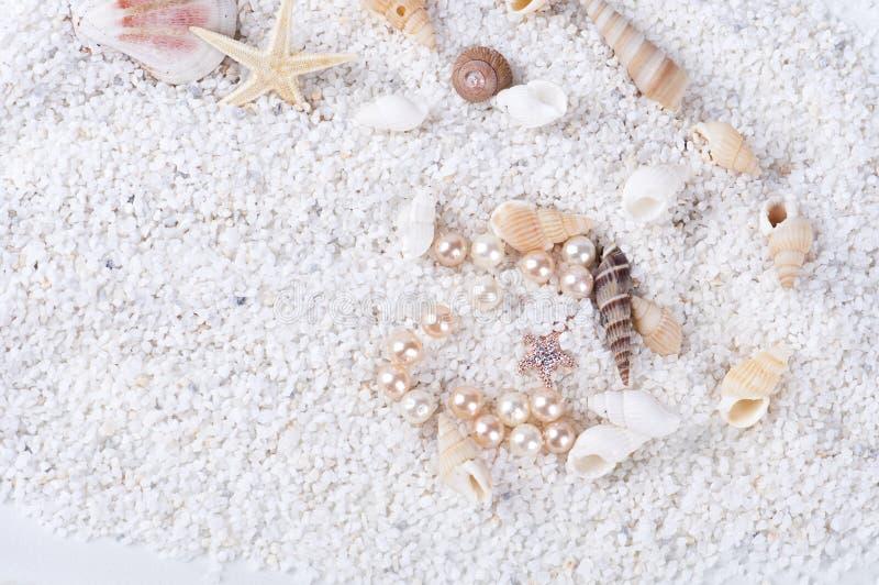 Sea shells on the sand stock image