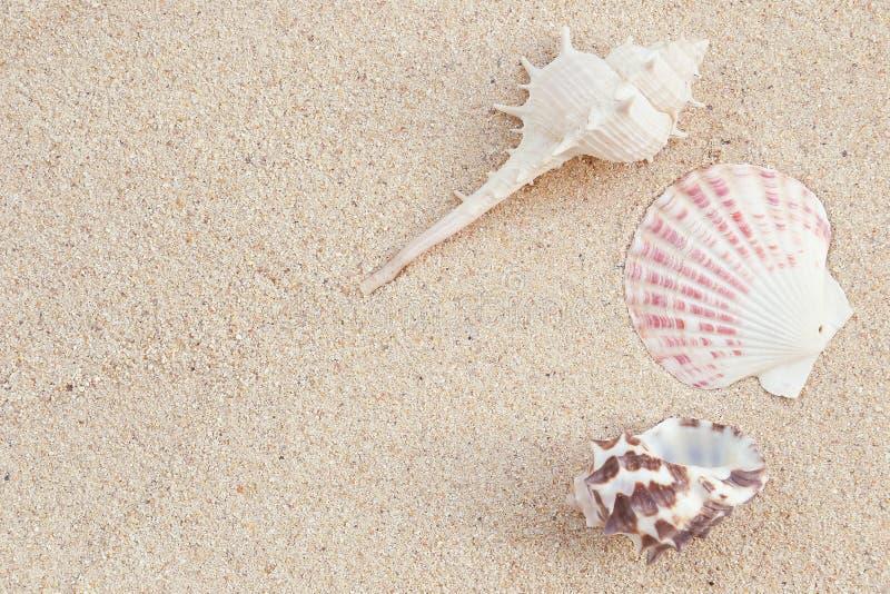 sea shells on sand stock image