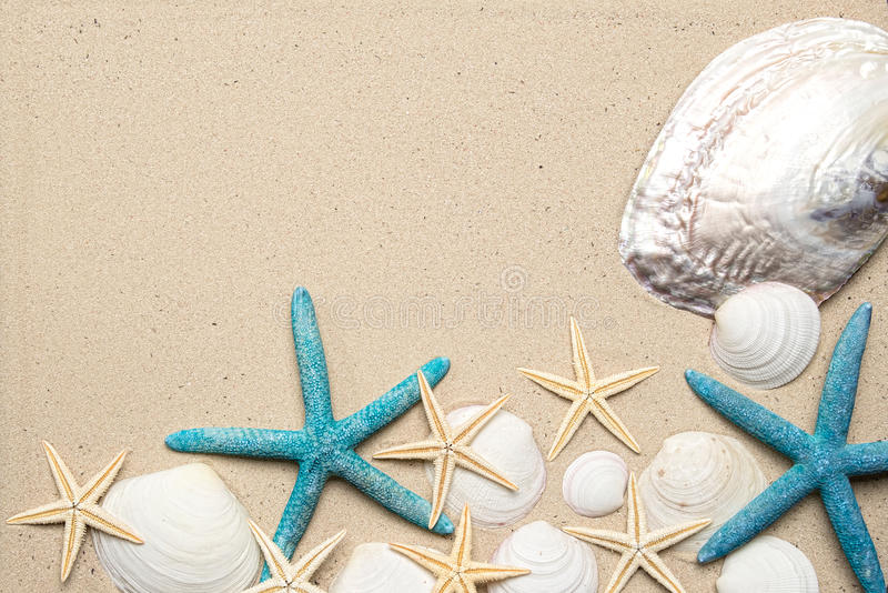 Sea shells on sand. Summer beach background. Top view stock image