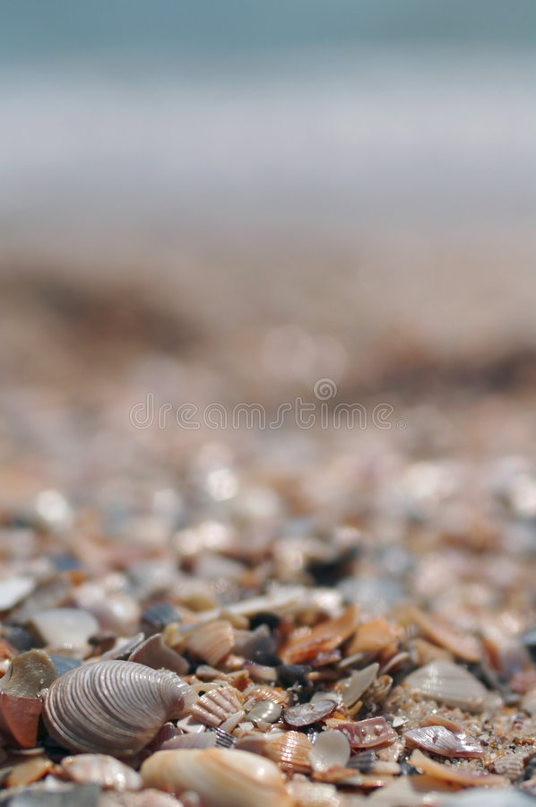 Sea shells with the sea at background stock images