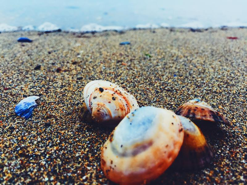 Sea shells on the sea shores of Ireland stock image