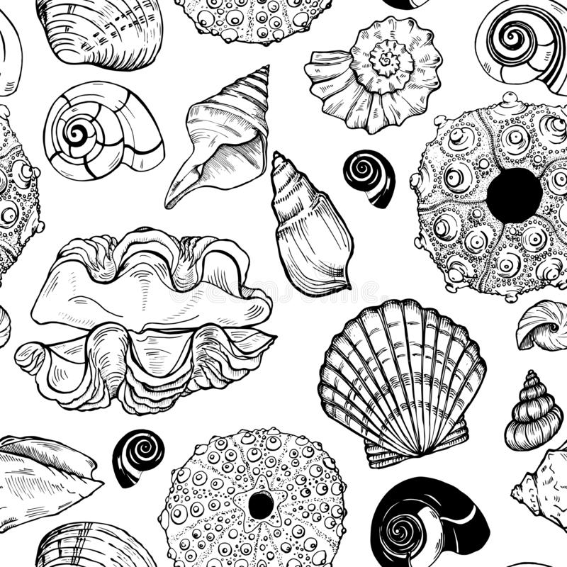 Sea shells and sea urchin shells seamless pattern vector illustration