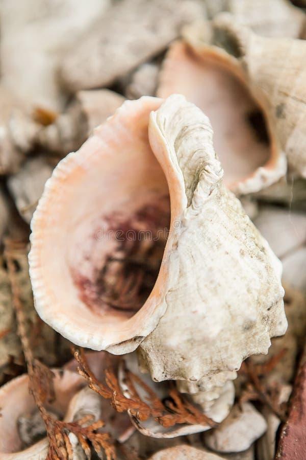 Sea Shells Seashells on beach stock image