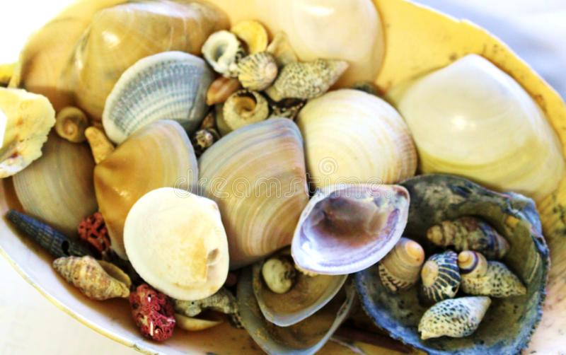 Sea Shells. Seashells are commonly found in beach drift, which is natural detritus deposited along strandlines on beaches by the waves and the tides. Shells are stock photo