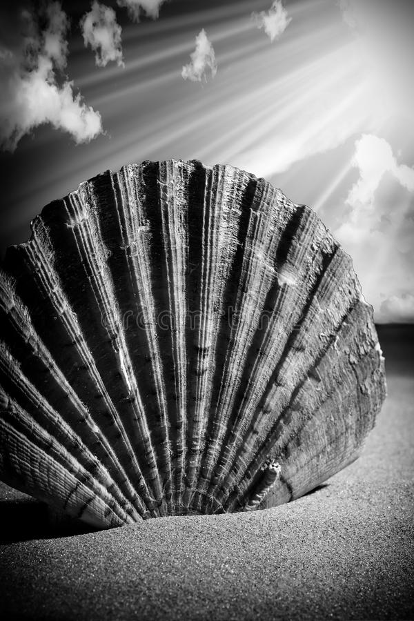 Free Sea Shells Seashells, Sea Shells From Beach - Panoramic - With L Royalty Free Stock Photography - 66610187