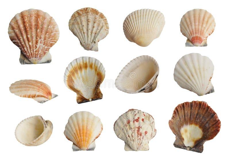 Sea shells set royalty free stock photography