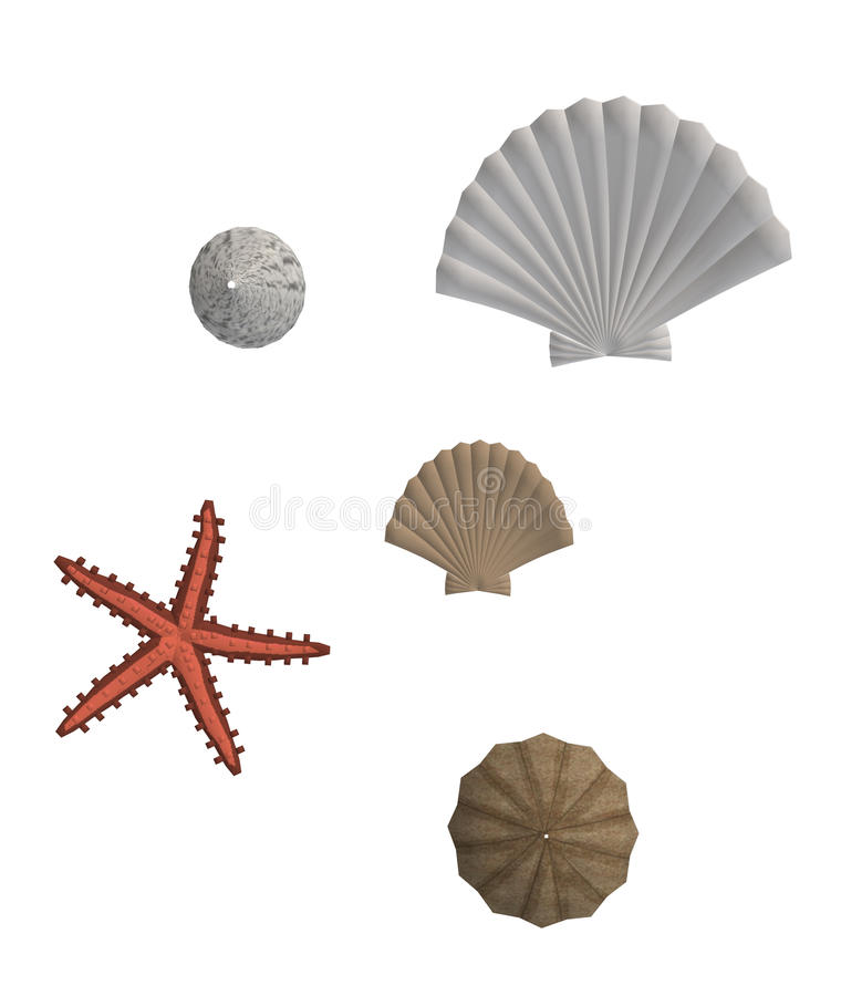Download Sea Shells And Star Fish stock illustration. Illustration of pericarp - 9833797