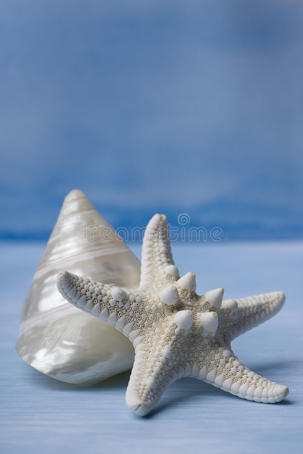 Download Sea Shells And Star Fish On Blue Watercolor Stock Image - Image: 7134759