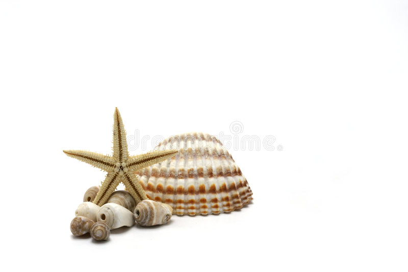 Sea Shells And Starfish. Isolated on white backround royalty free stock images