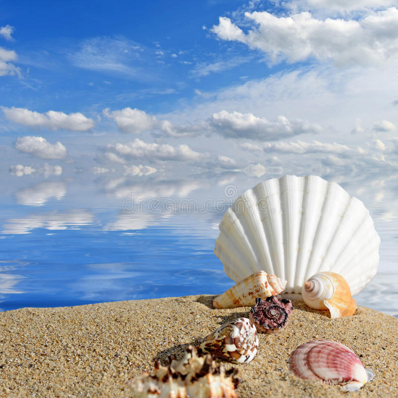 Wood Floor On Beach Sea And Blue Sky For Background Stock: Sea Shells And Starfish On A Beach Sand Stock Photo