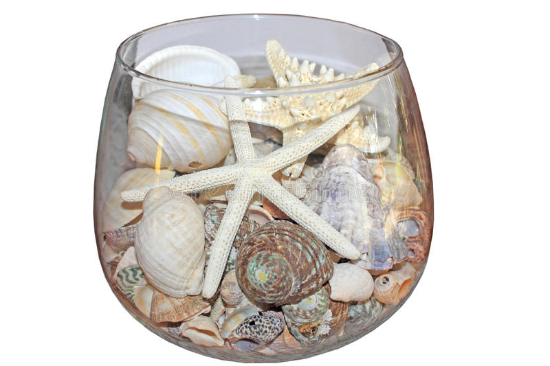 Sea shells and starfish in glass bowl. Ornamental display of Sea shells and starfish in glass bowl isolated on a white background stock images