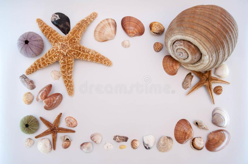Sea shells and starfish. Isolated on a white background royalty free stock photos
