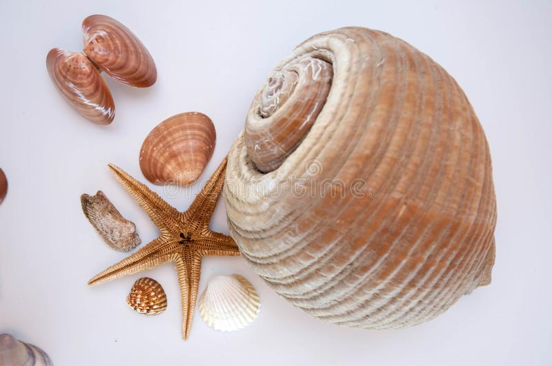 Sea shells and starfish. Isolated on a white background stock image