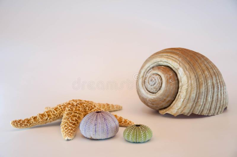Sea shells and starfish. Isolated on a white background stock photos