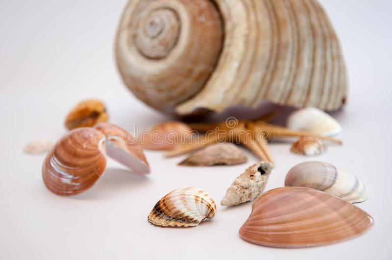 Sea shells and starfish. Isolated on a white background stock images