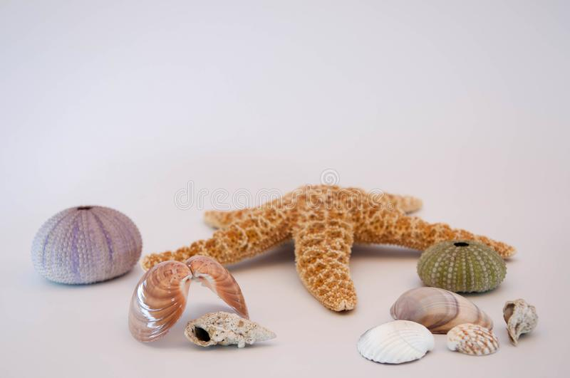 Sea shells and starfish. Isolated on a white background royalty free stock photo