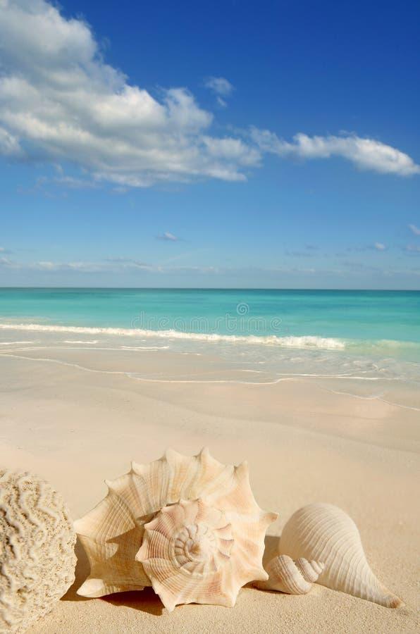 Sea shells starfish sand turquoise caribbean royalty free stock image