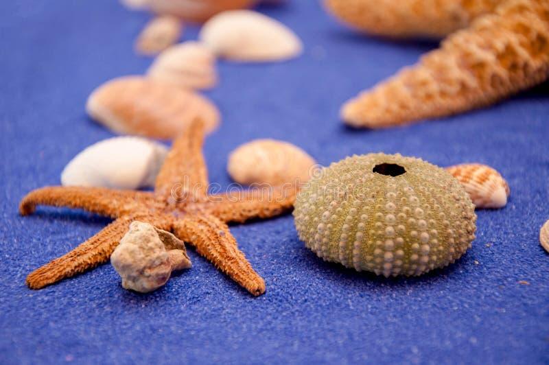 Sea shells and starfish. Seashell, Star Shape stock images