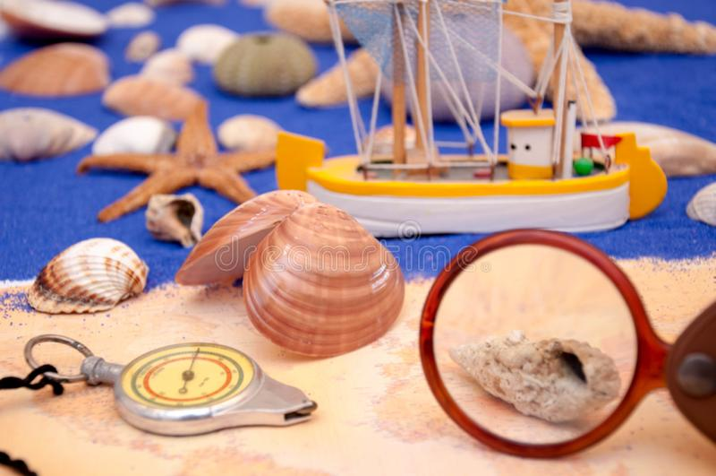 Sea shells and starfish. Seashell, Star Shape royalty free stock photography