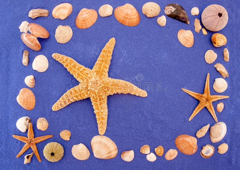 Sea shells and starfish. Seashell, Star Shape royalty free stock images