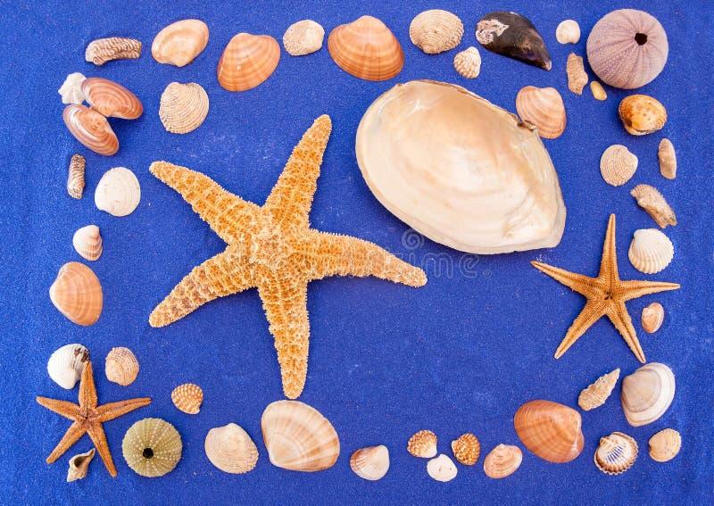 Sea shells and starfish. Seashell, Star Shape royalty free stock image