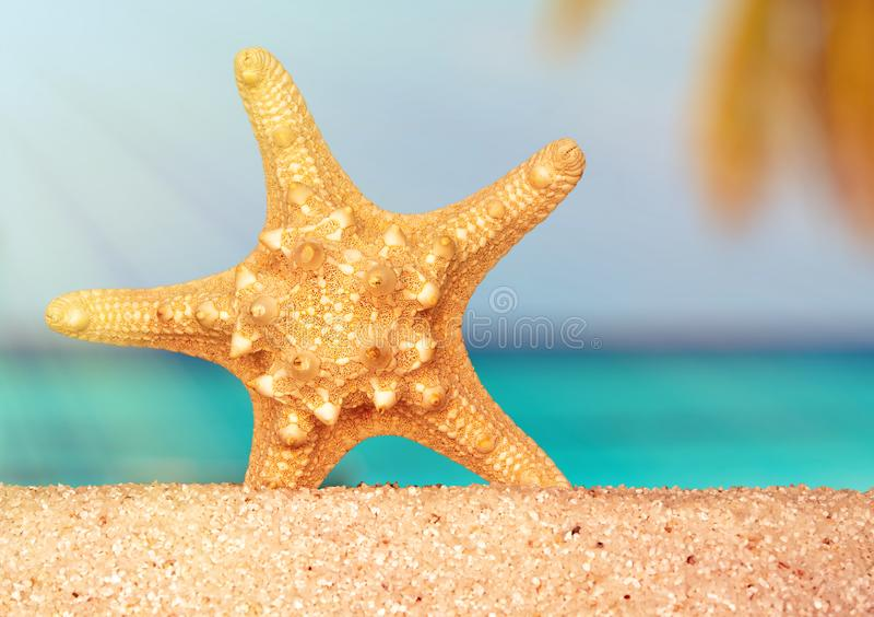 Sea shells starfish on tropical sand turquoise caribbean summer vacation travel stock image