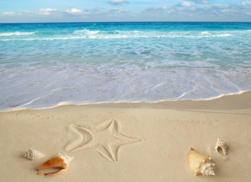 Sea shells starfish tropical turquoise caribbean royalty free stock photos