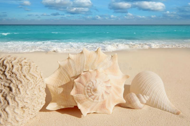 Download Sea Shells Starfish  Turquoise Caribbean Stock Photo - Image: 14444340