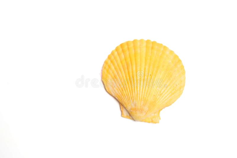Sea shells and starfish on a white. Background royalty free stock photo