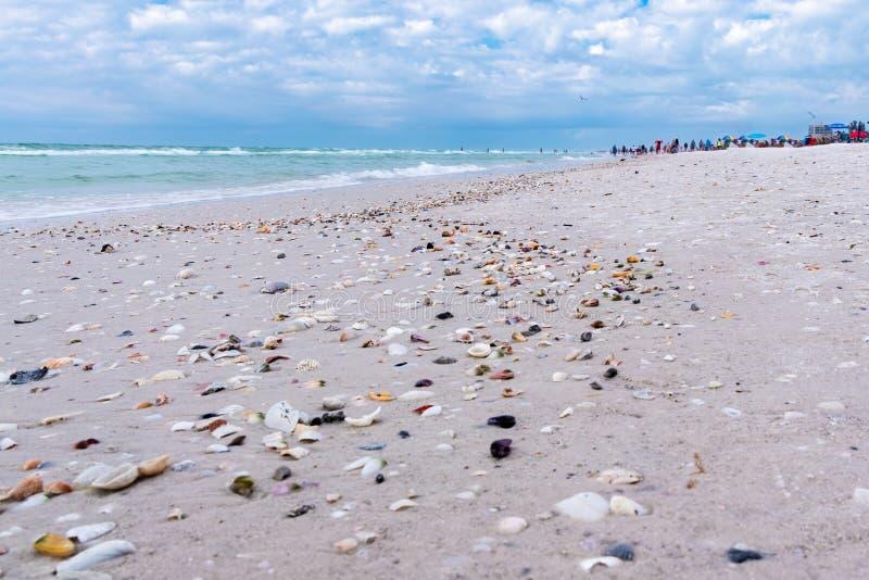 Sea Shells sur la plage Siesta Key en Floride, États-Unis image libre de droits