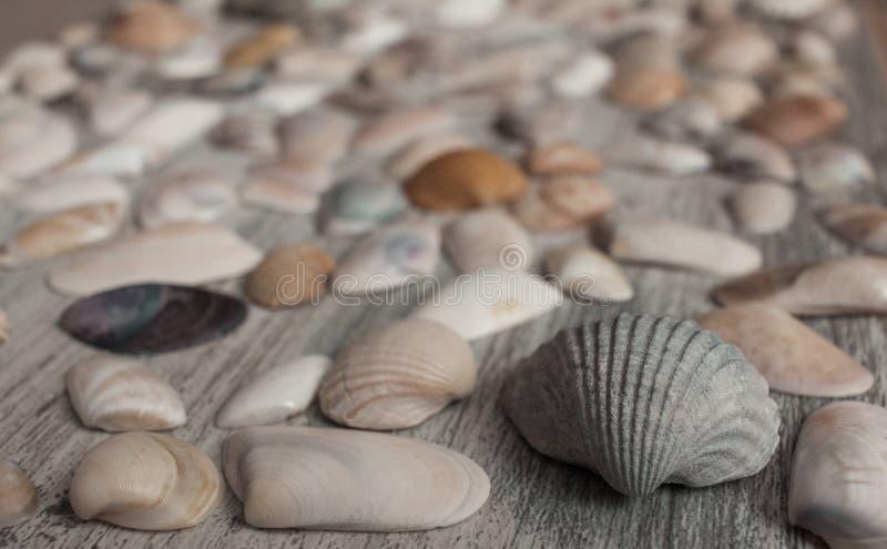 Sea shells. On a table stock photos