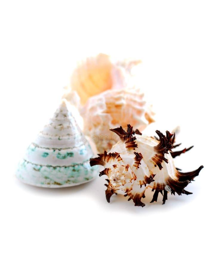 Sea shells on white royalty free stock photos
